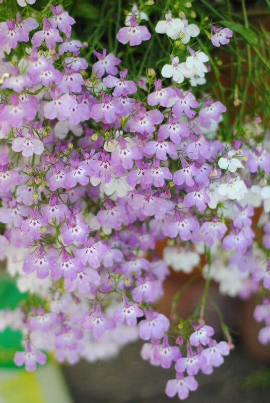 cascading-flowers-1