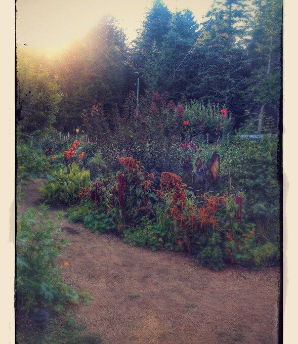 Hollyhock-Garden-Cortes-Island