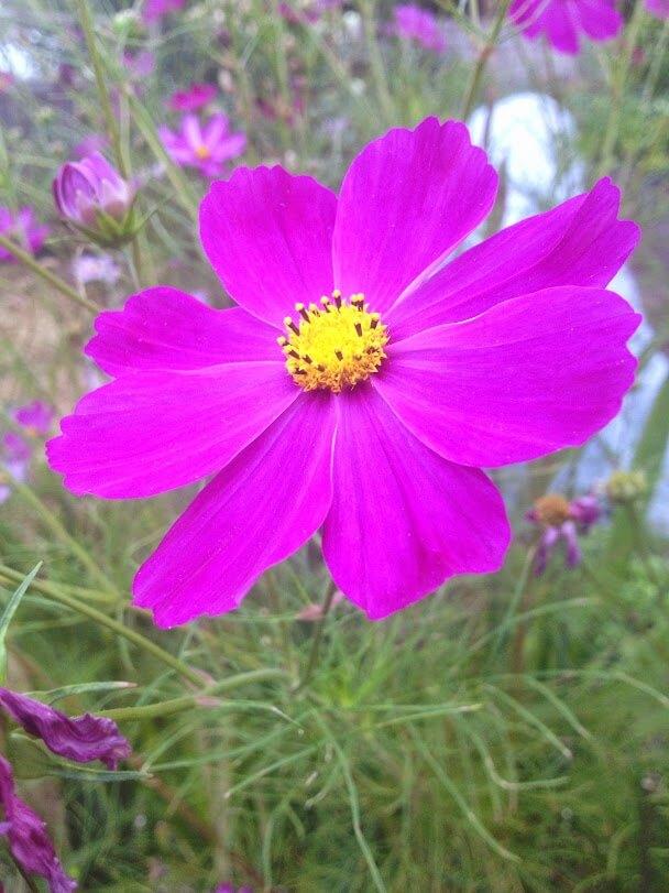 flower-in-garden